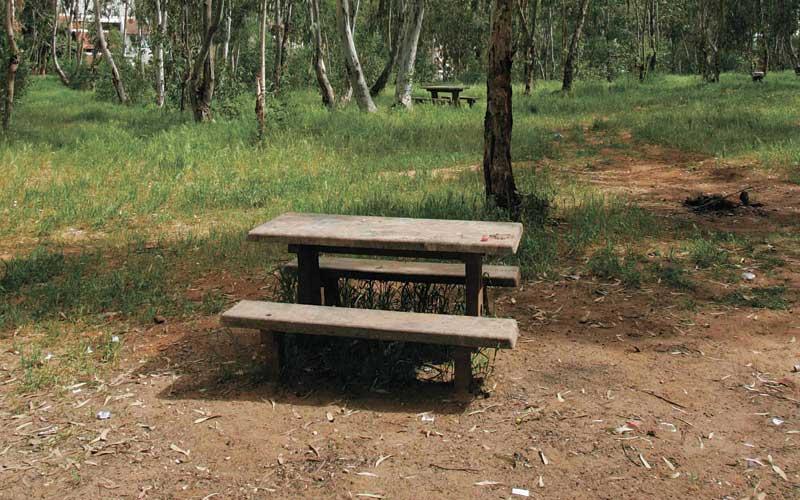 יער אוסישקין. צילום עזרא לוי