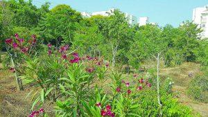 הגינה הקהילתית בהרצליה הצעירה. צילום התושבים