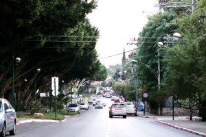 שדרת העצים ברחוב ששת הימים. צילום ניר קידר