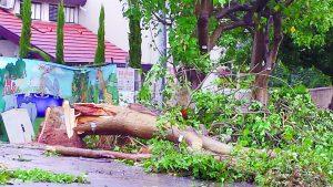 הסופה לפני שנתיים בכפר סבא