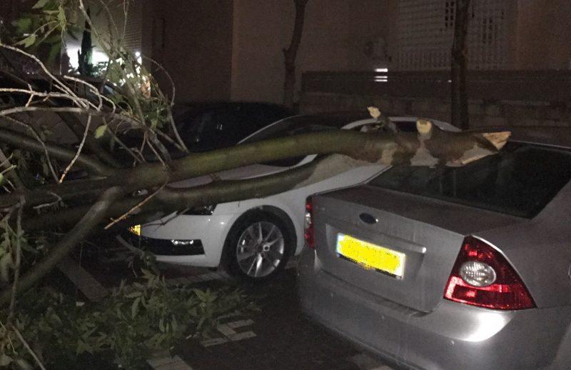 כלי הרכב שנפגע מנפילת עץ בשכונת הדרים. צילום טל יעקובי