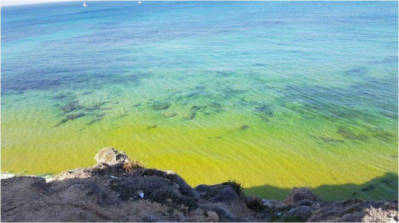 הכתם הצהוב בחוף אפולוניה. צילום רם זאבי