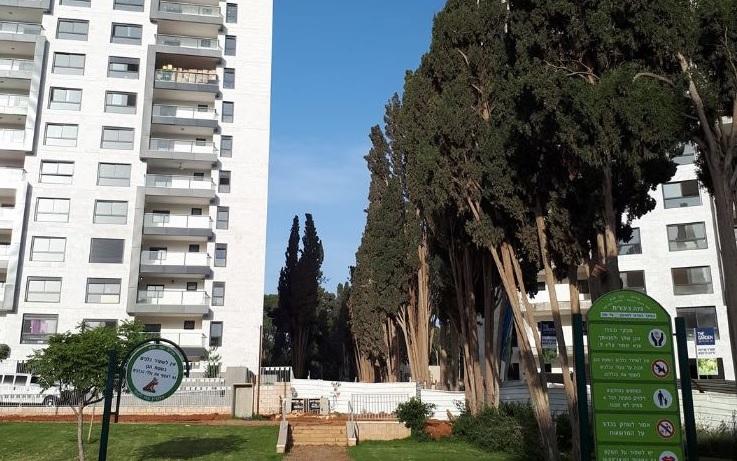 שדרת הברושים והבנייה. צילום נילי מעיין בן יהודה