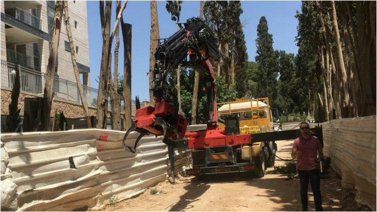 כריתת הברושים בשדרה המערבית בגן מנשה. צילום התושבים
