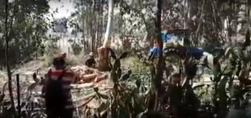 כריתת העצים ביער אוסישקין. צילום עילאי הרסגור