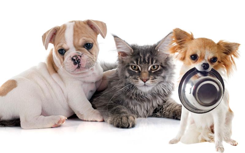 חנויות מזון וציוד לבעלי חיים (מאגר Ingimage)