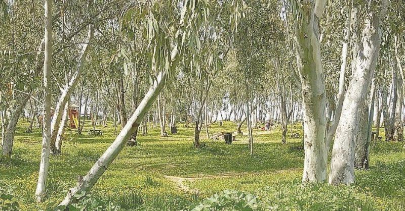 יער קפלן. צילום ישובעם חכמון