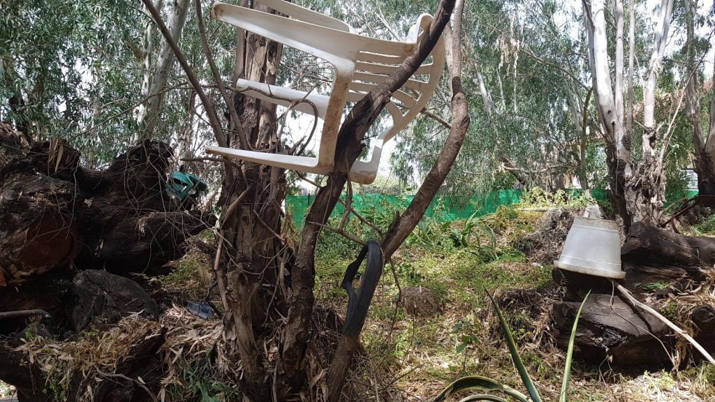 יער אוסישקין. צילום באדיבות נתיבי ישראל