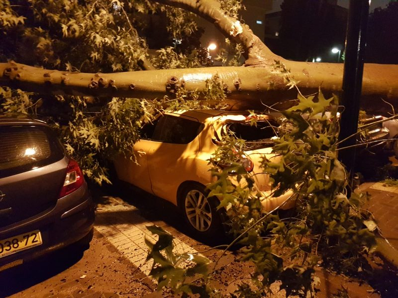 העץ קרס ברחוב עמק דותן. צילום ערן שיינקמן