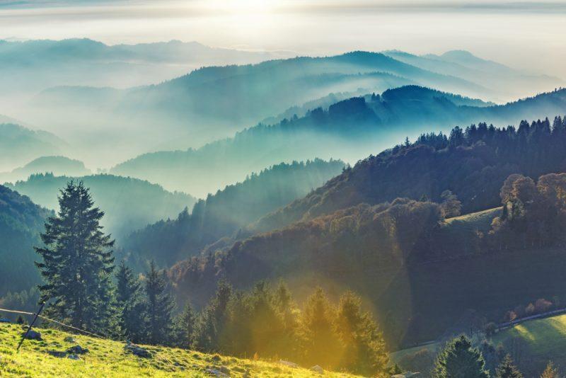 היער השחור. תמונה ממאגר Shutterstock, Funny Solution Studio
