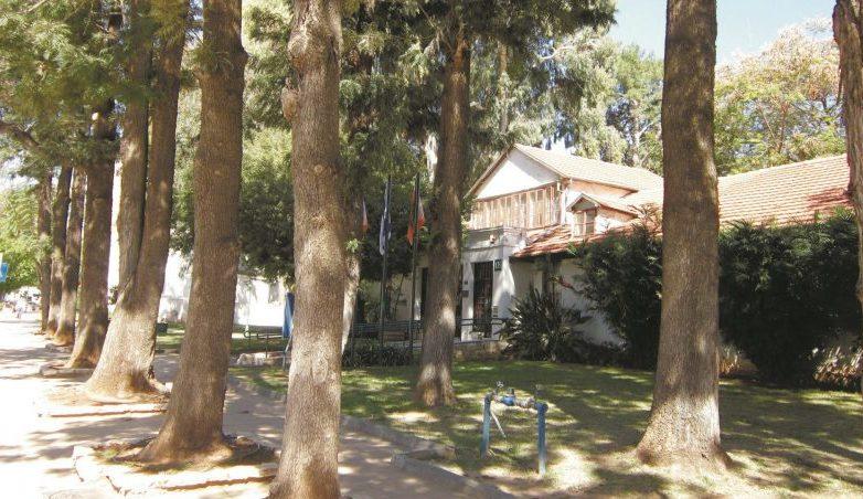 עצים בחזית עיריית כפר סבא. צילום שרונה לימן