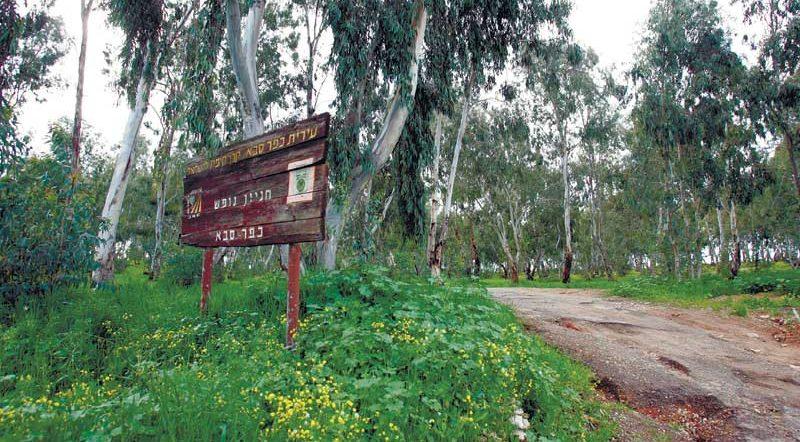 יער קפלן. צילום ניר קידר