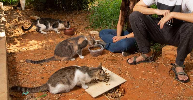 מאכילים חתולים. צילום תומר אפלבאום