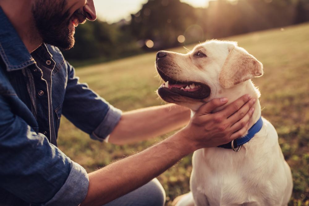 קורס כלבנות טיפולית. (Shutterstock) צילום: 4 PM production