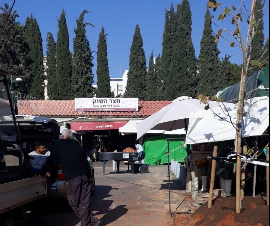 עץ הדולב ששתלה העירייה בשוק