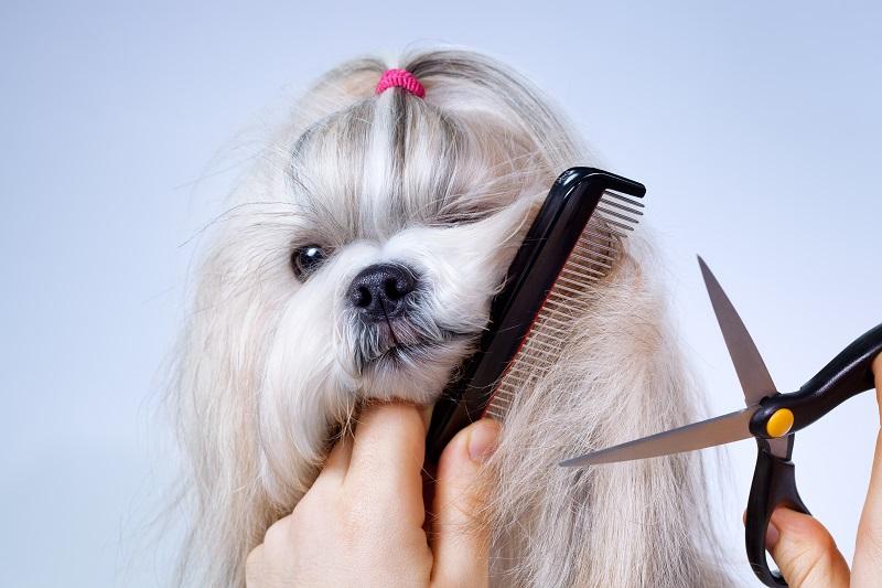 מספרת כלבים בכפר סבא. צילום: chaoss, Shutterstock