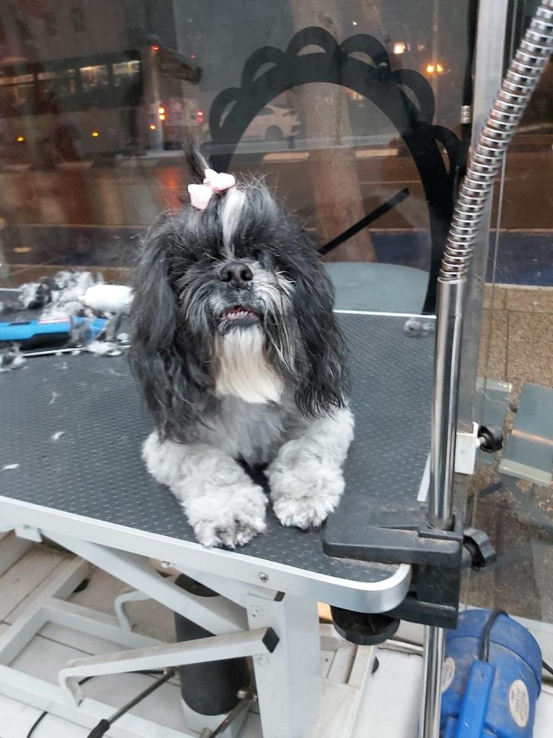Animalove: חנות ומספרת בוטיק לחיות מחמד. צילום עצמי