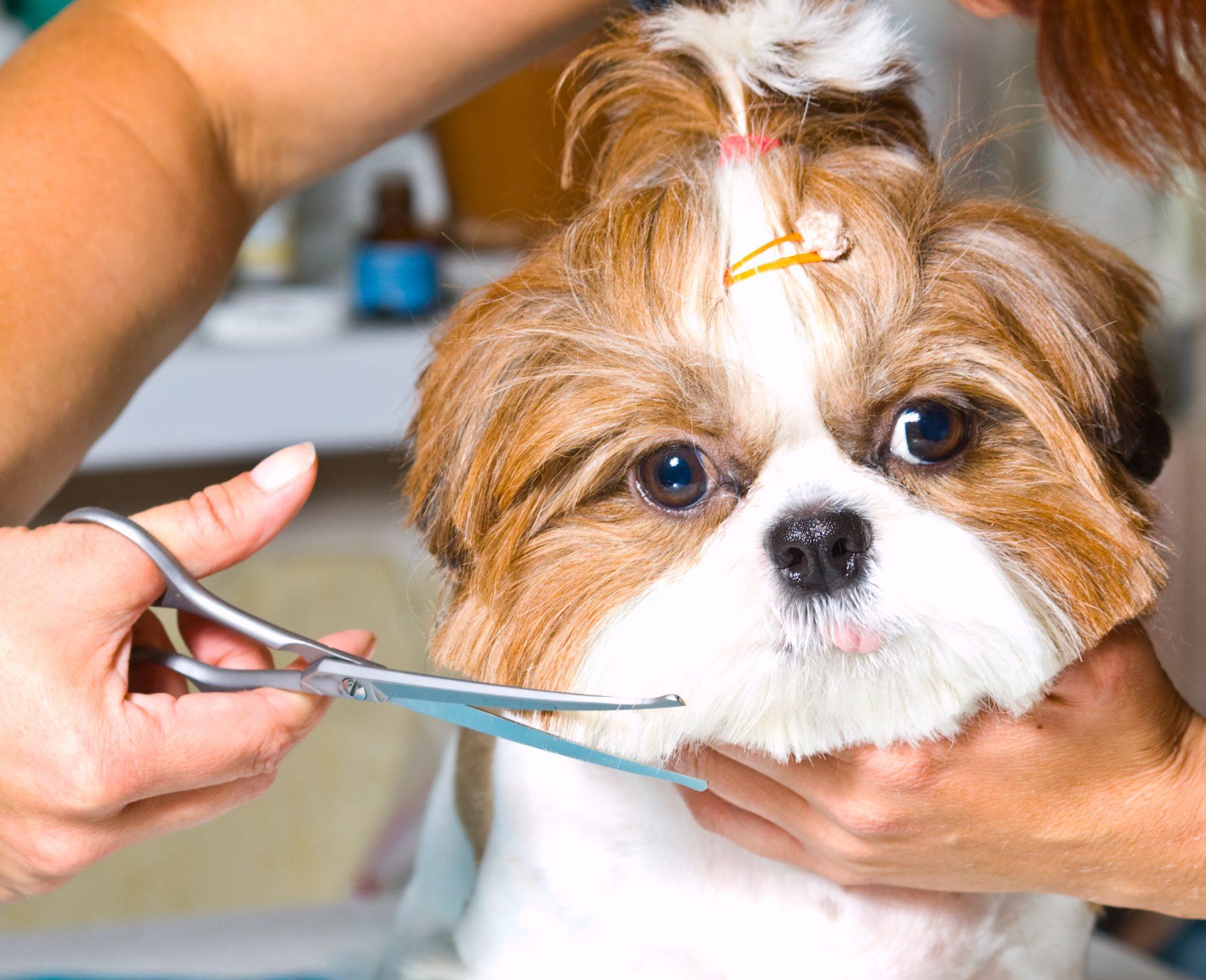 ספר כלבים מומלץ (Shutterstock) צילום: siamionau pavel
