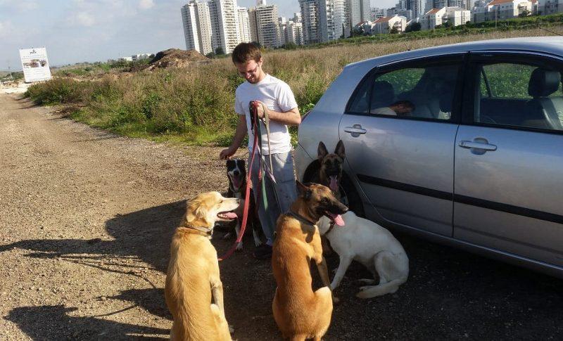 אוראל לוינשטיין: ניסיון בעבודה עם כלבים מכל הסוגים (צילום עצמי)
