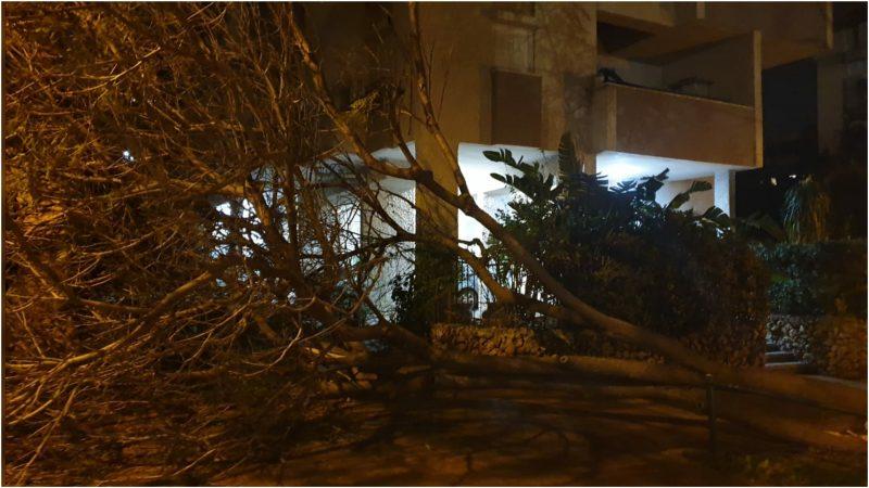 עץ שקרס ברחוב תל חי. צילום פרטי