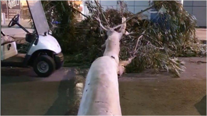 העץ שקרס ליד קניון G בכפר סבא. צילום דוד חזרתי