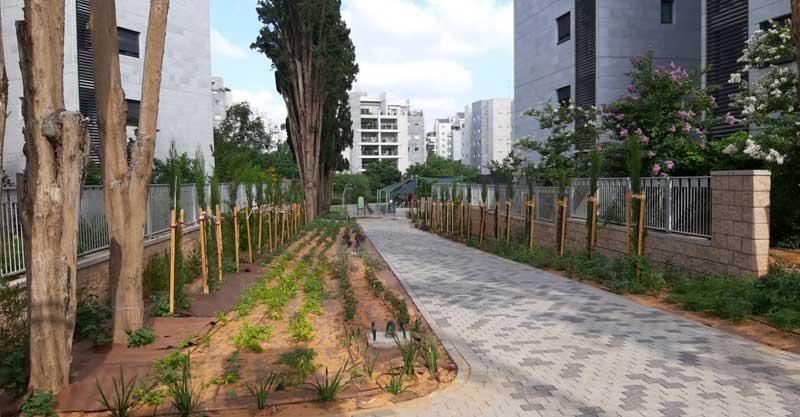 העצים החדשים שניטעו בשדרת הברושים המובילה לגן מנשה בכפר סבא. צילום באדיבות משמר האילנות