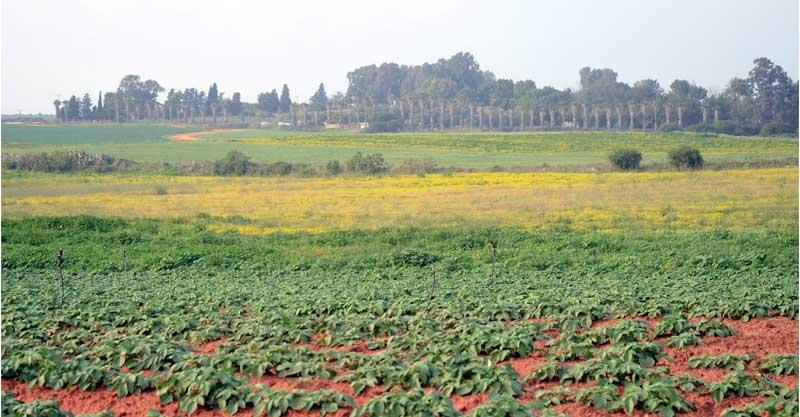 השטחים החקלאיים של ניר אליהו. צילום זאב שטרן